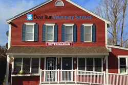 deer run veterinary services pet friendly martha's vineyard mass