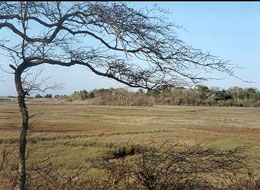 pet friendly park martha's vineyard: caroline tuthill wildlife preserve