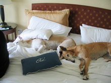 dog friendly hotel