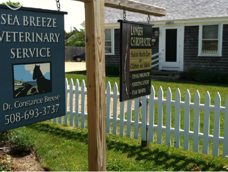 vet in martha's vineyard pet friendly animal clinic in marthas vineuard mass
